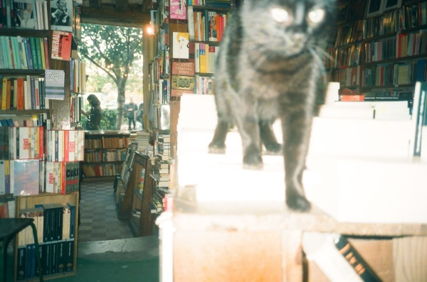 Cat at S&Co