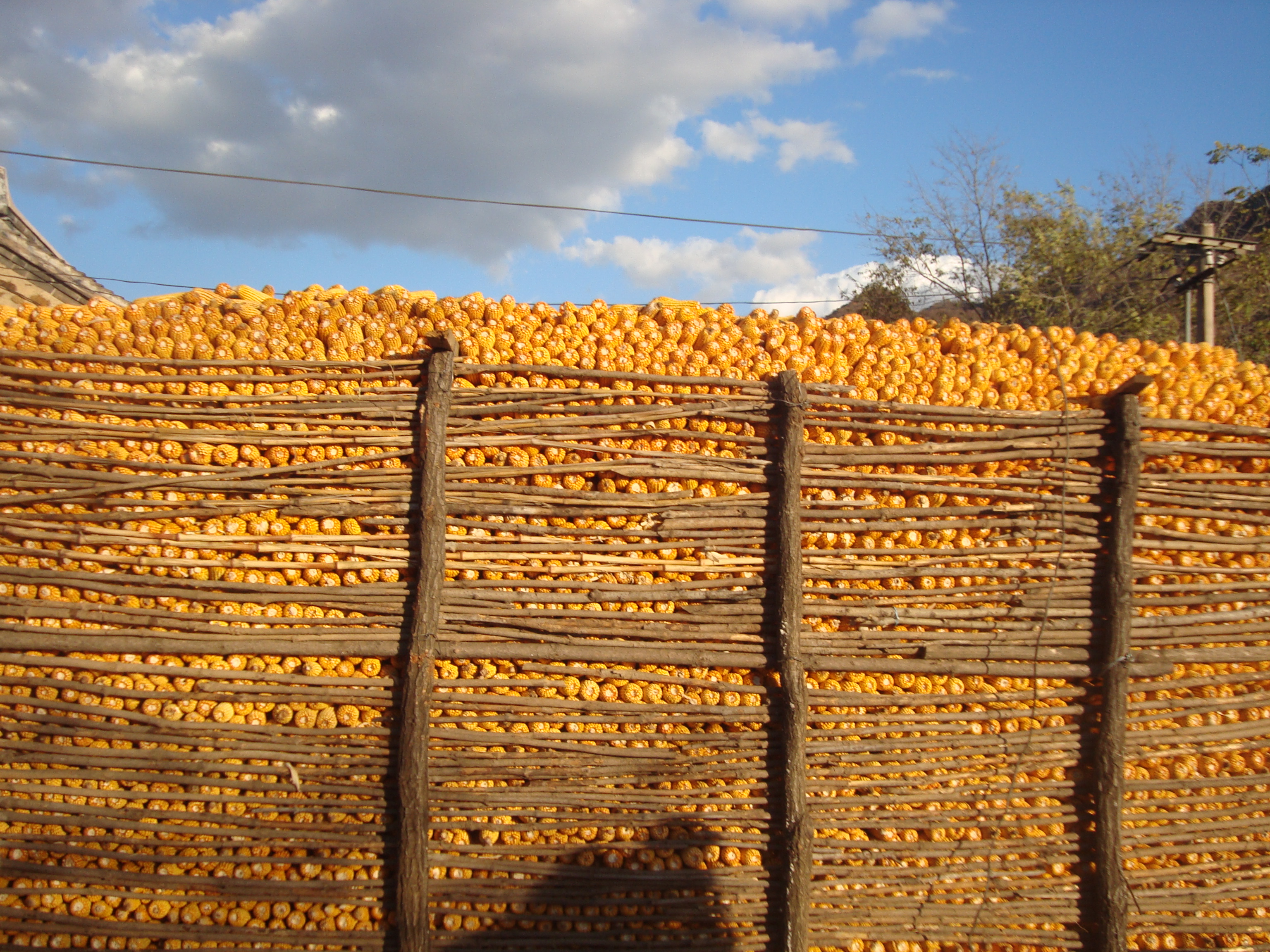 Stacked corn.JPG