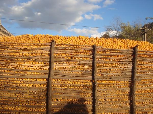 Stacked corn.JPG